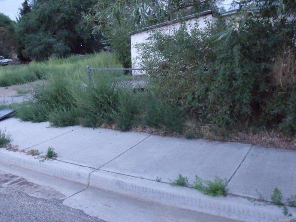 Weeds-Yard1.jpg
