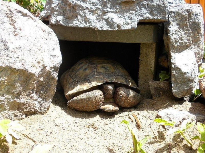 Nearly 40 Tortoises Need Homes in Utah – Adopt One Today