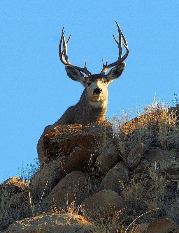 dustin_stettler_6-24-2013_silhouetted_buck_at_Nash_Wash_WMA.jpg