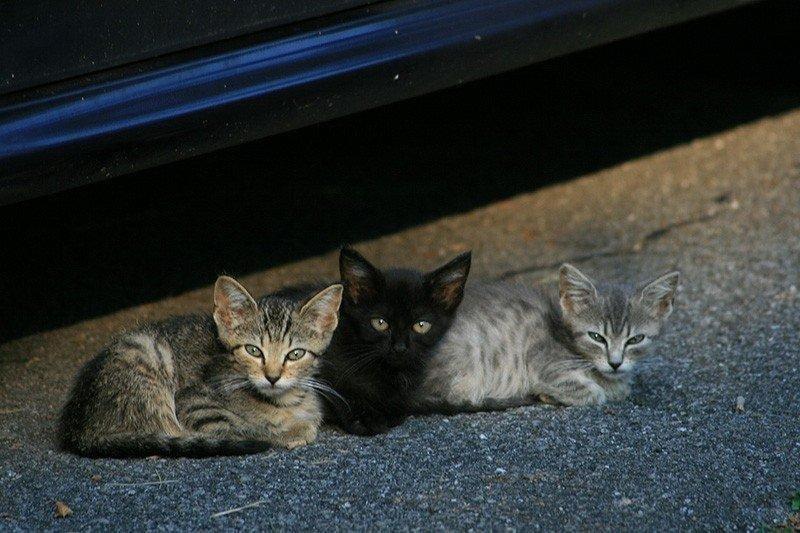 kittens-489174_1280.jpg