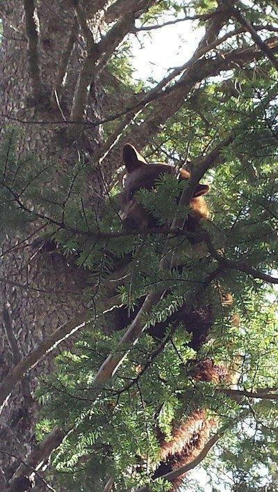 bear-resize.jpg