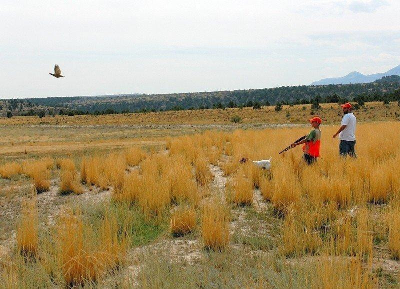 brent_8-30-2007_chukar_flushes_in_front_of_young_hunter_1.jpg