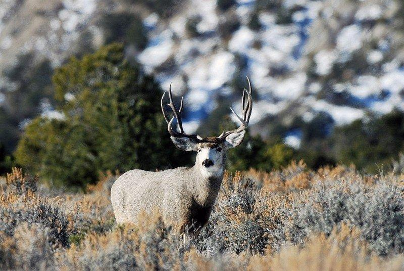 Carbon-Co.-buck-on-12-13-by-Brent-Stettler_094.jpg