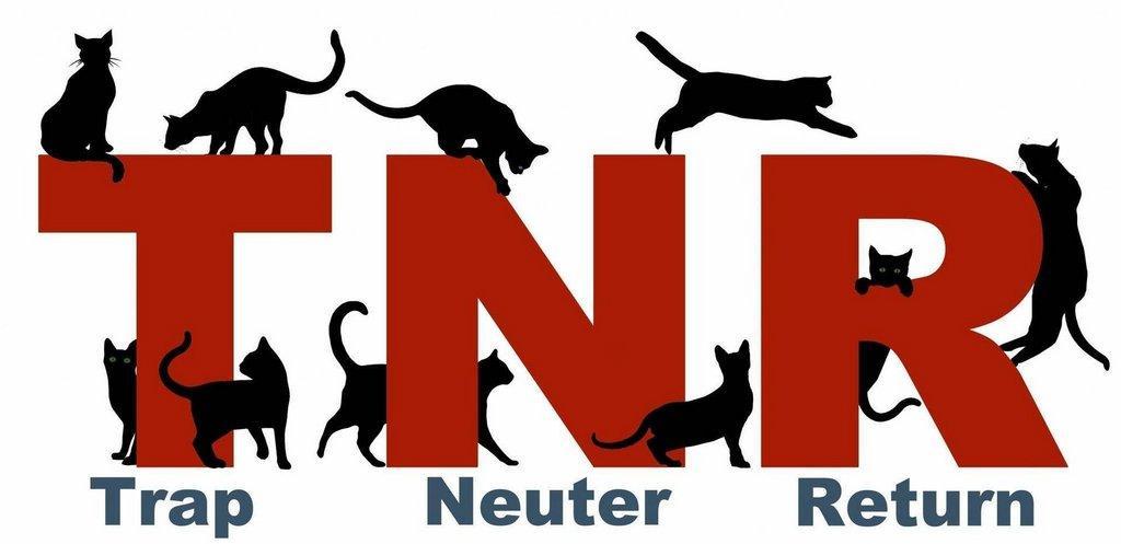 TNR-no-words-flattened-copy-e1354449258502.jpg