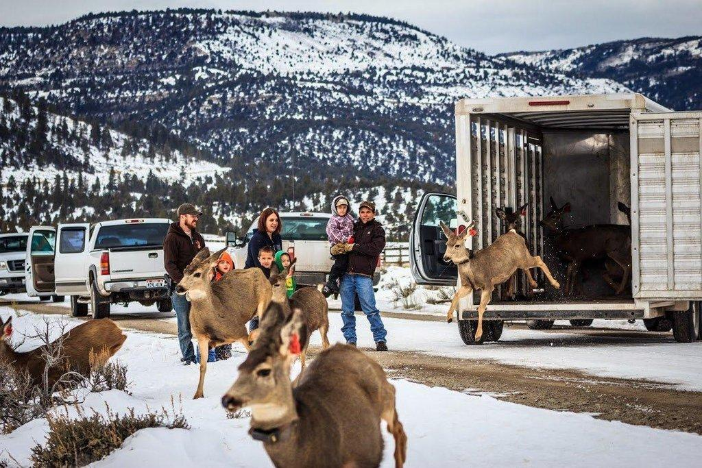 Deer-are-released-from-the-trailer-as-the-familes-of-DWR-personnel-watch.-Photo-by-Brandon-Behling-2.jpg