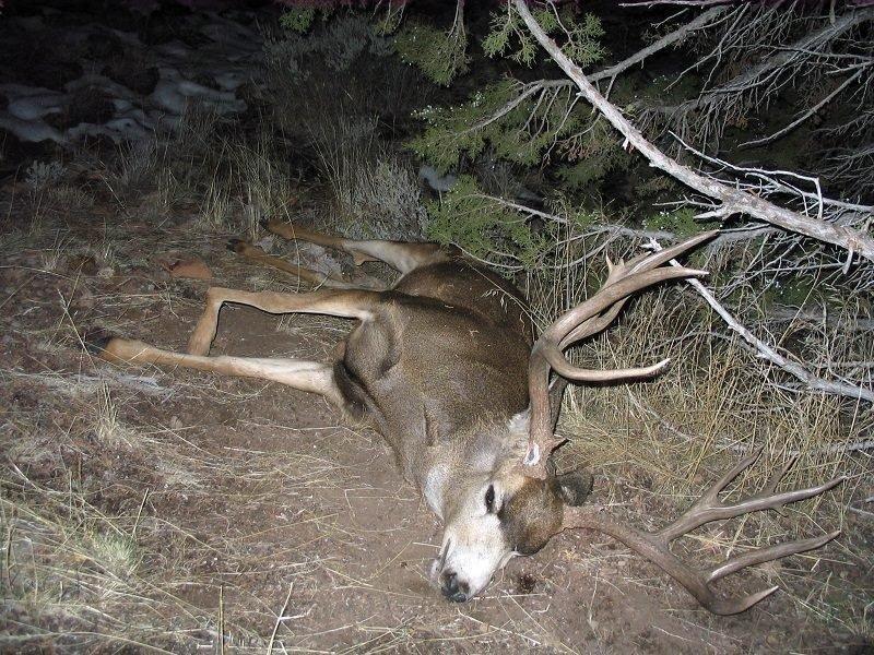 joshua_carver_11-13-2011_black_hills_6x7_buck_deer.jpg