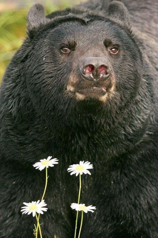 lynn_11-22-2011_black_bear_6.jpg