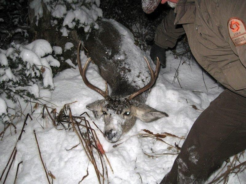 mitch_lane_poached_deer_winter_range_in_box_elder_county_12-13-2011.jpg