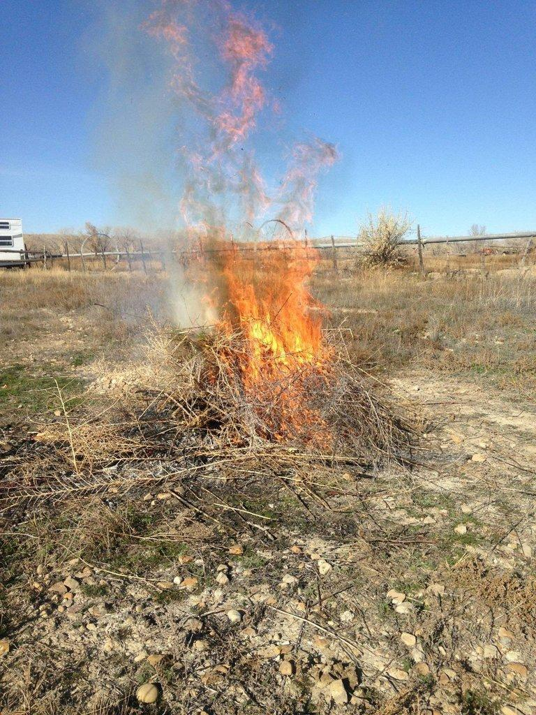 weed-burn.jpg