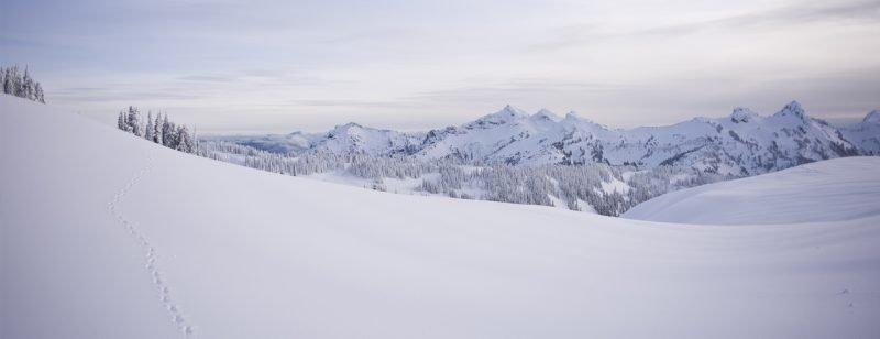Snow-field-1260px.jpg