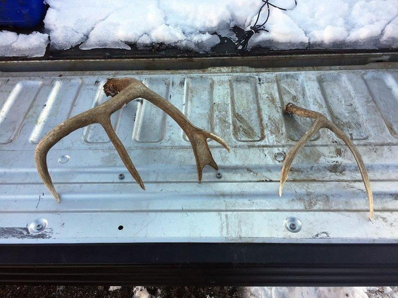 2-16-2017_shed_antlers_illegally_collected_in_Utah_1.jpg