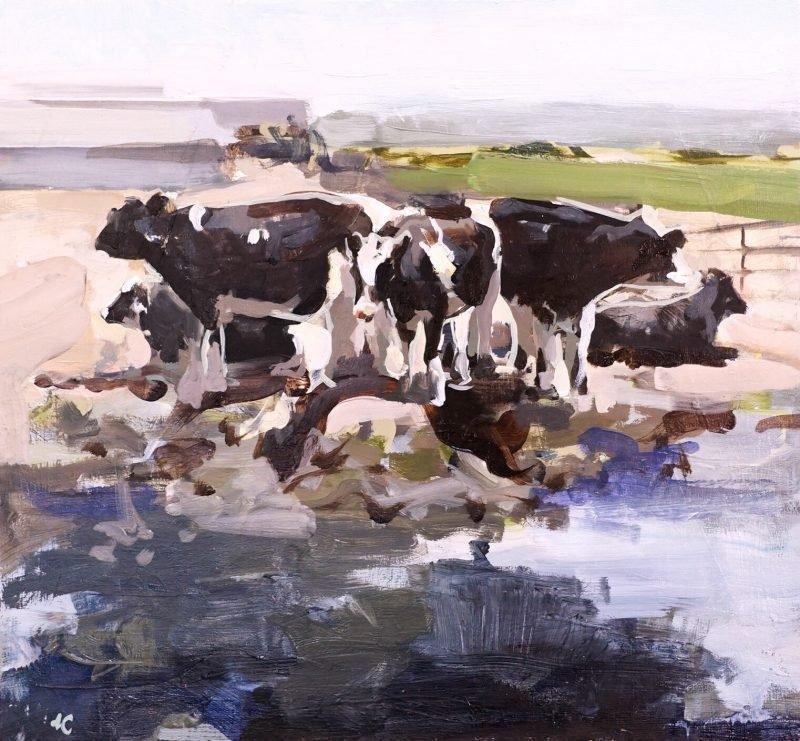 Cows-in-Feedlot.jpg