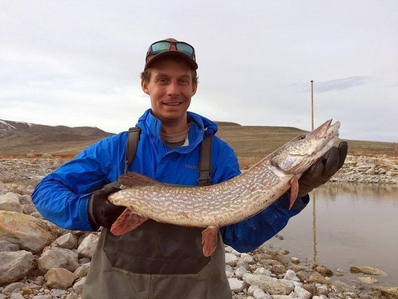 chris_crockett_3-21-2017_DWR_biologist_Dale_Fonken_shows_a_northern_pike_caught_during_surveys_at_Utah_Lake.jpg