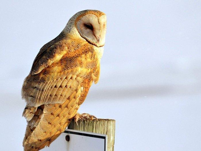 3-16-18_owl.jpg