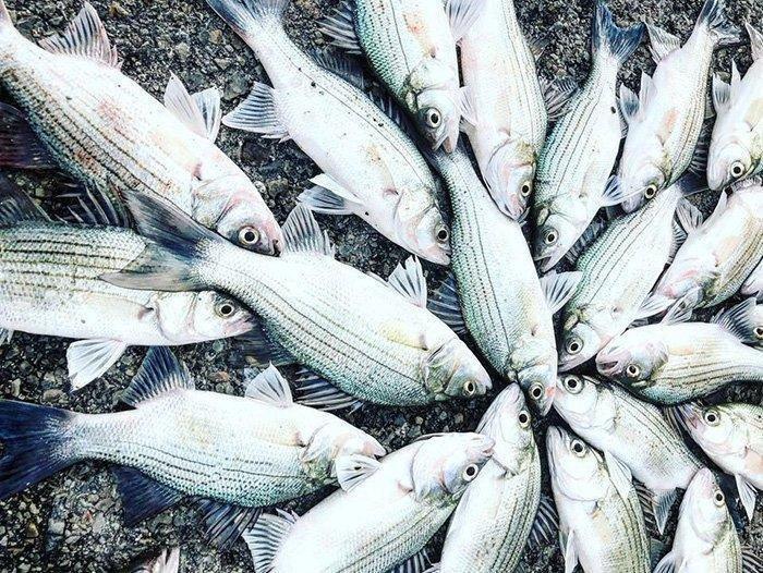 4-6-18_fish.jpg