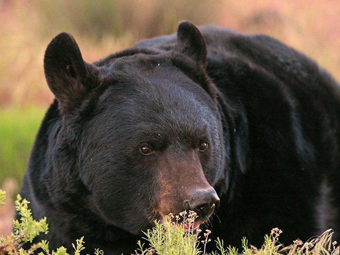 5-11-18_bear.jpg