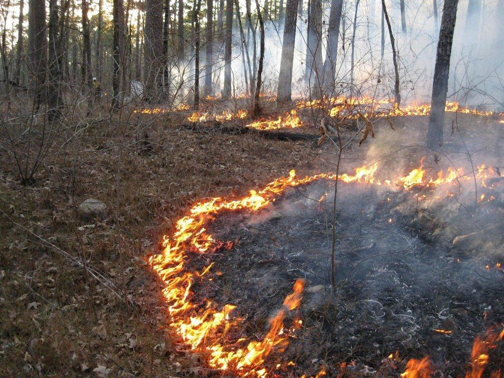 SRS_2016_-Fuel_Smoke_and_Prescribed_Fire_in_the_Ouachita_Mountains.jpg