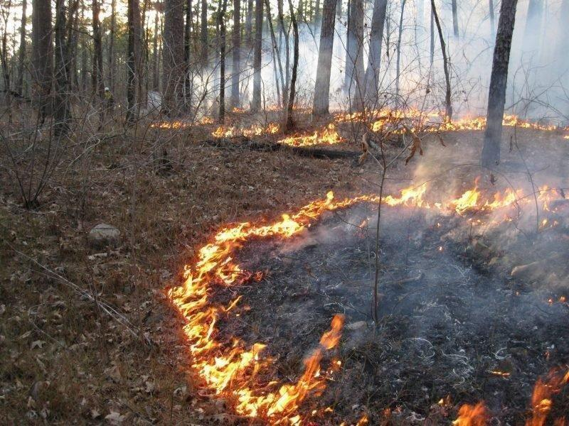 SRS_2016_-Fuel_Smoke_and_Prescribed_Fire_in_the_Ouachita_Mountains-800x600-800x600.jpg