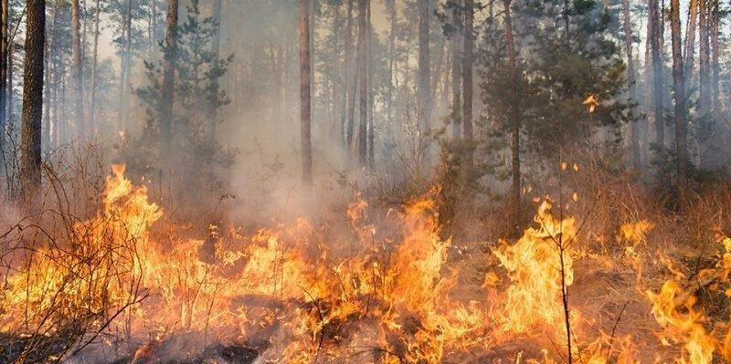 p_wildfire_62158552.jpg