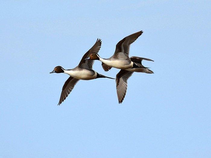 8-10-18_ducks.jpg