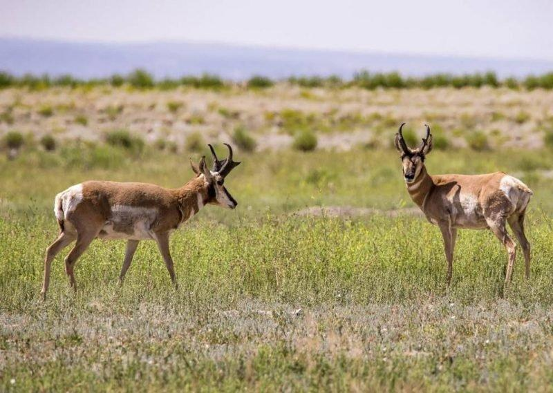 Public-Lands-Wildlife.jpg