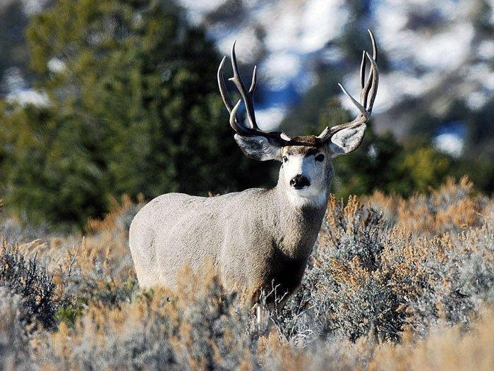 18-10-05_buck_deer.jpg