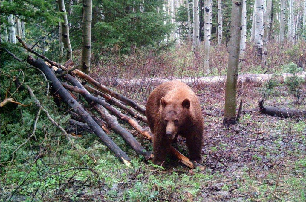 ted_hallows_5-17-2009_black_bear_near_Kamas_2.jpg