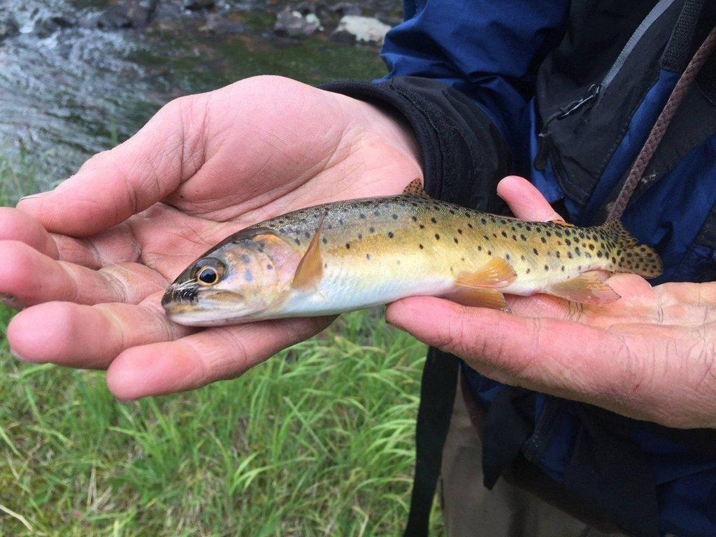 tonya_kieffer-selby_2-12-2019_angler_shows_cutthroat_trout_caught_in_the_Uintas.jpg