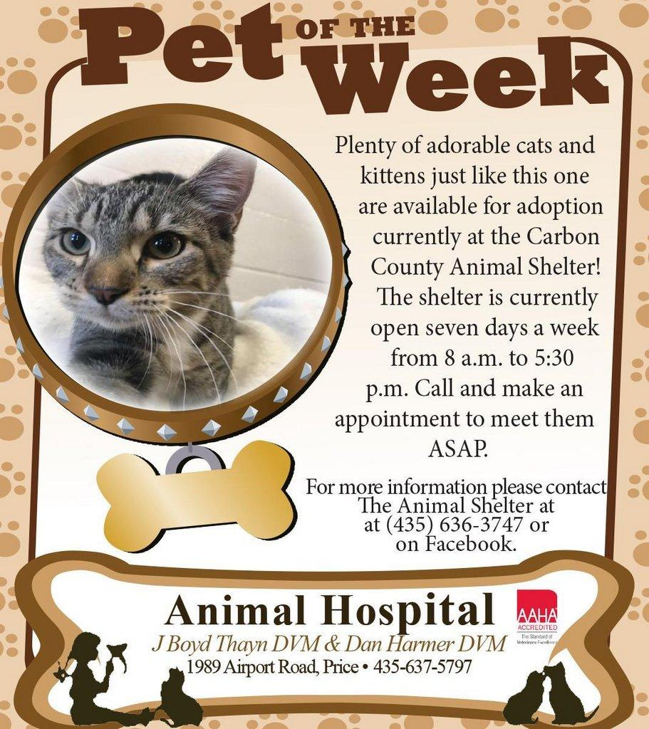 10-28-NEW-Brown-Pet-of-the-Week-CC-Shelter-2x4-1.jpg
