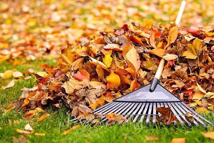 fall-tasks-image3.jpg