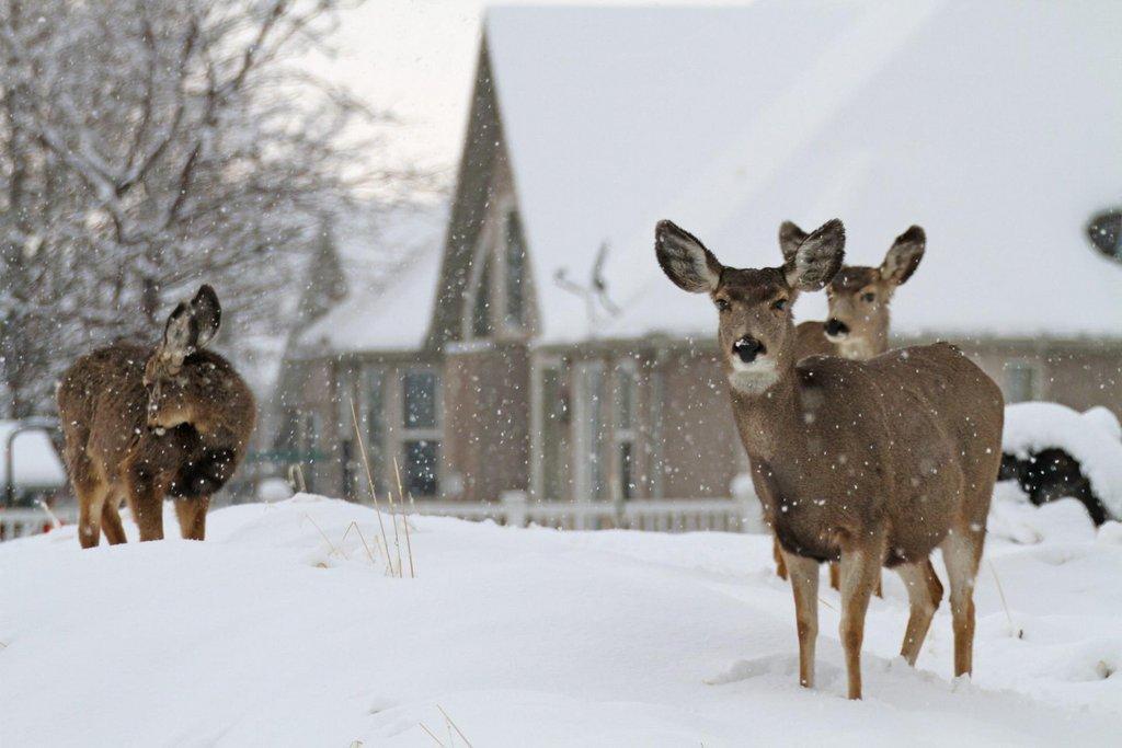 2016_deer_by_homes_in_Springville-scaled.jpg