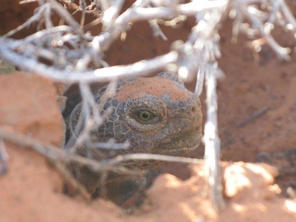 tortoise6.jpg