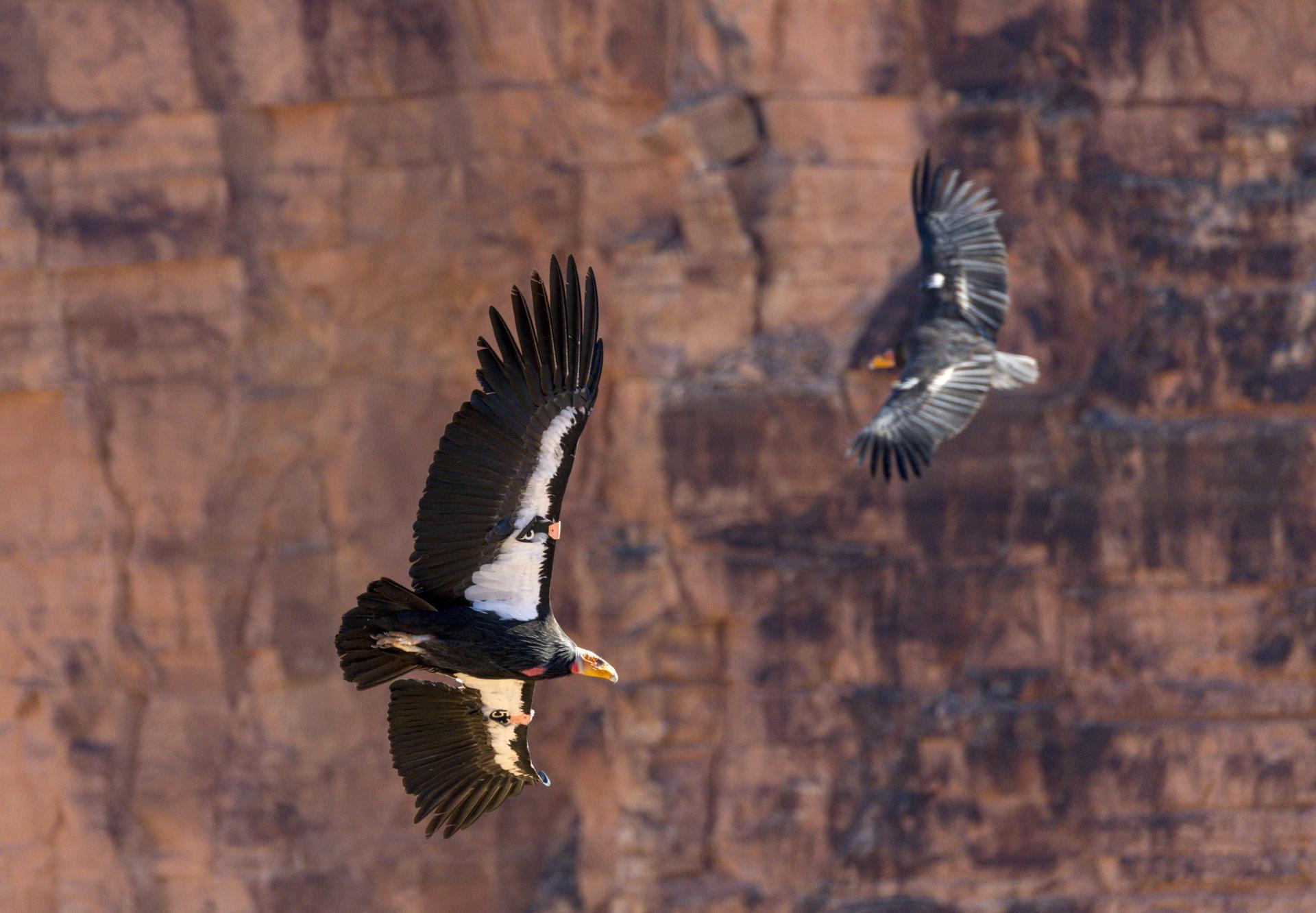 Condors-circling_Jim-Shane-scaled.jpg