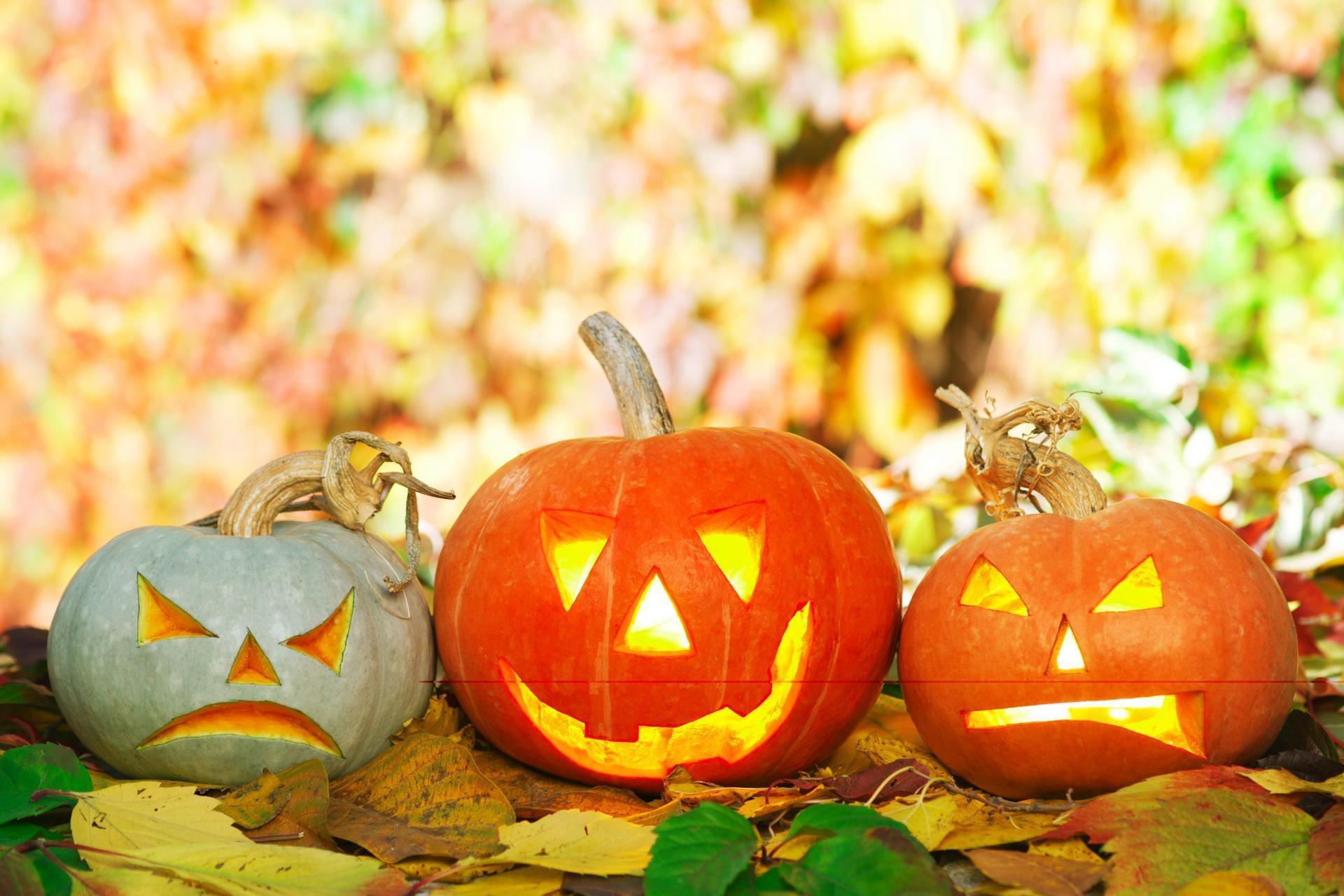 pumpkins-scaled.jpg