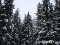 snowypines-800x600-1.jpg
